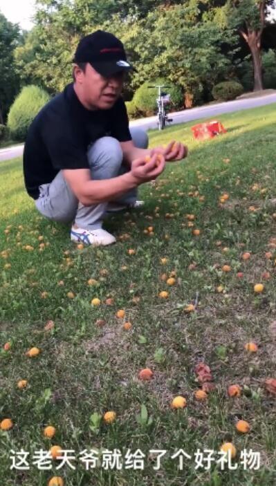 黄渤自己捡杏做杏酱