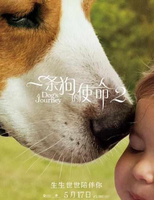 《一条狗的使命2》上映