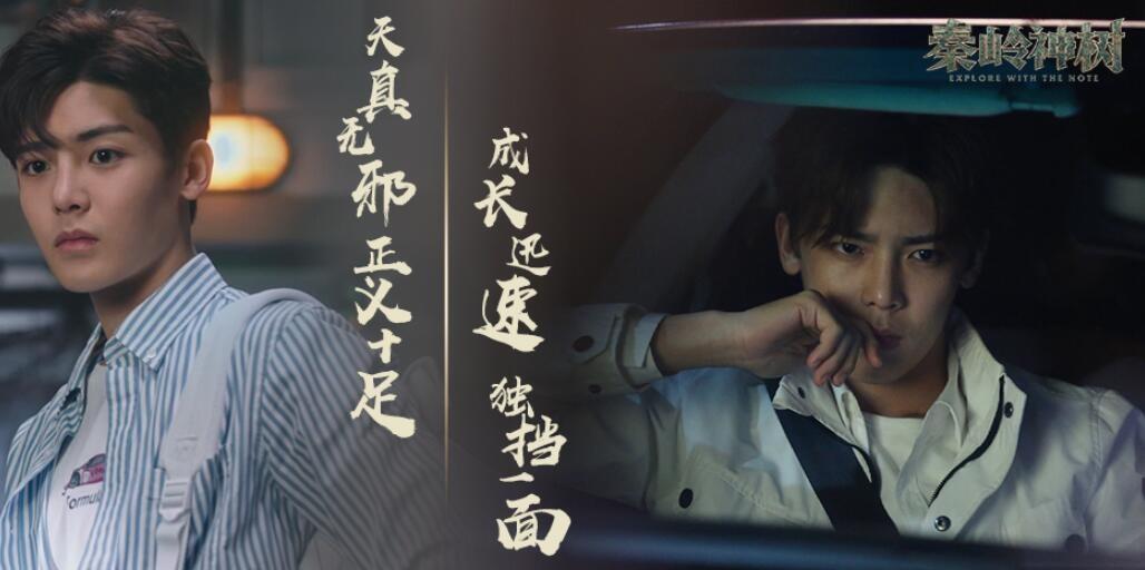 《秦岭神树》海报